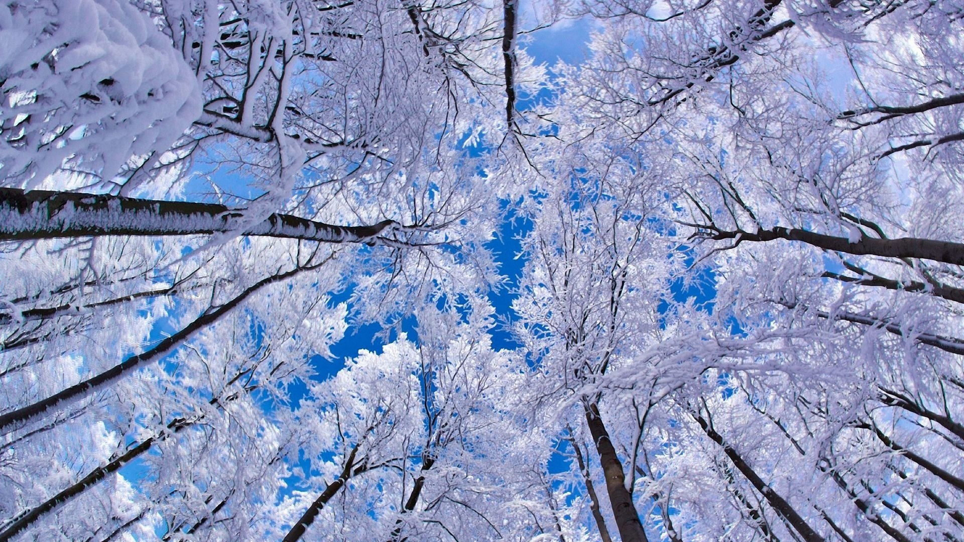Snowy Trees And Blue Sky Hd Wallpaper Hd Wallpapers