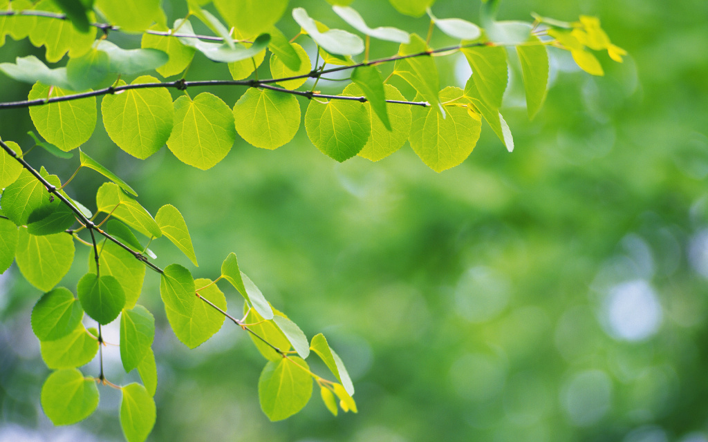 Branch With Green Leaves HD Wallpaper