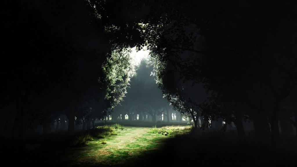Forest Glade HD Wallpaper