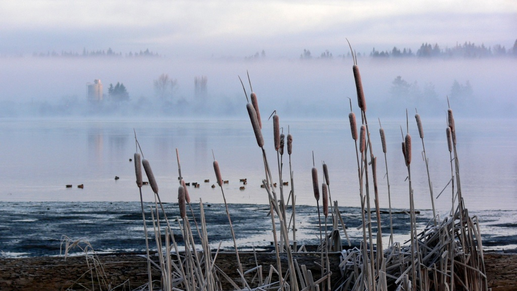 Frosted Cattails HD Wallpaper