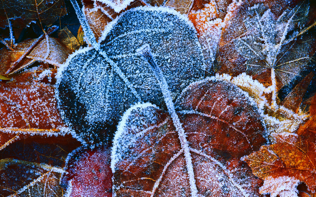 Frosted Leaves HD Wallpaper
