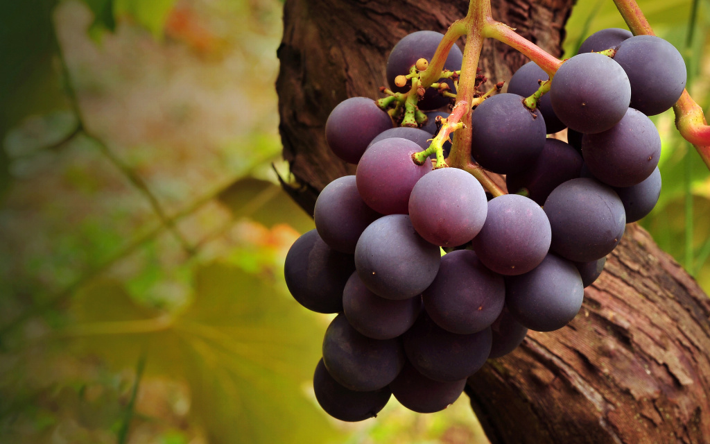 Grape HD Wallpaper