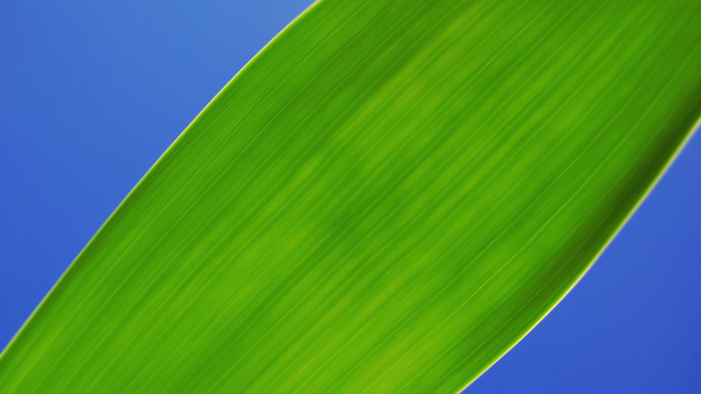 Green Leaf Macro HD Wallpaper