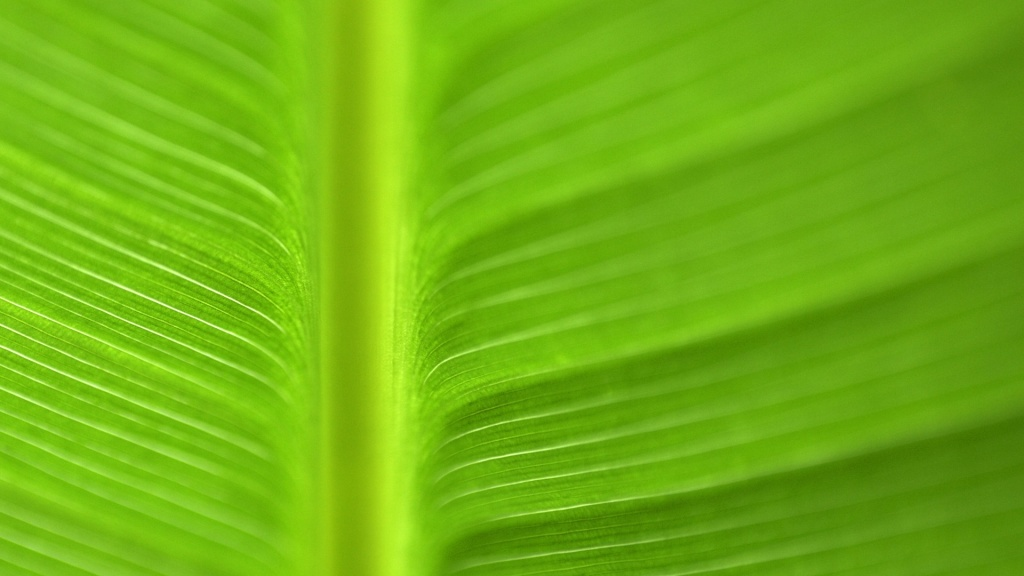 Leaf Macro HD Wallpaper