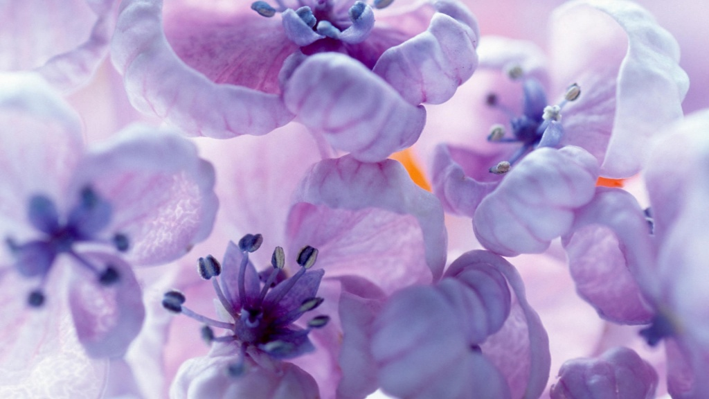 Lilac Flowers HD Wallpaper