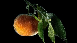 Tangerine Fruit