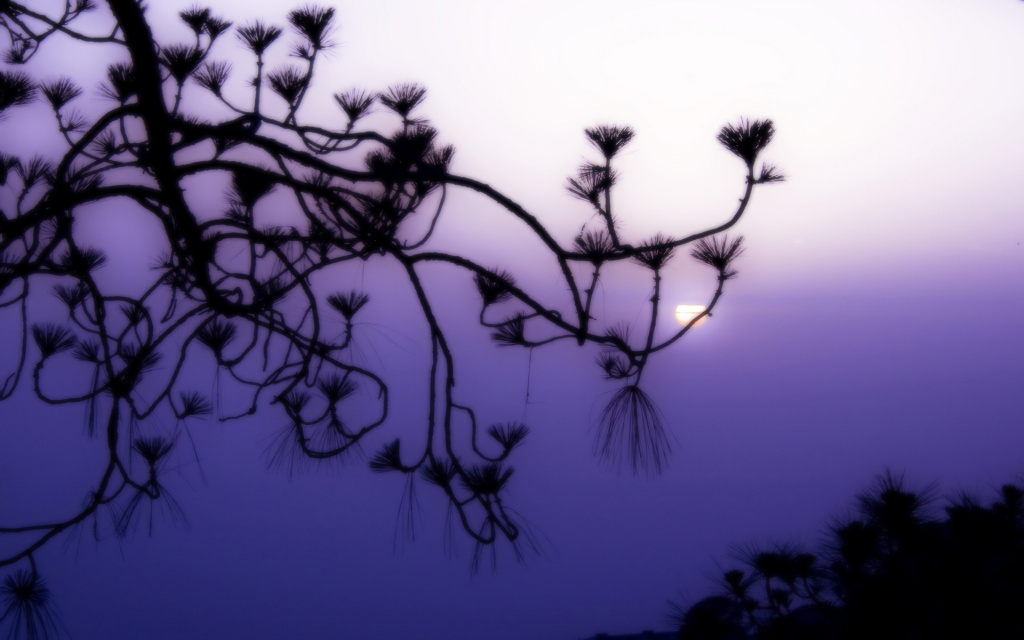 Purple Dusk HD Wallpaper