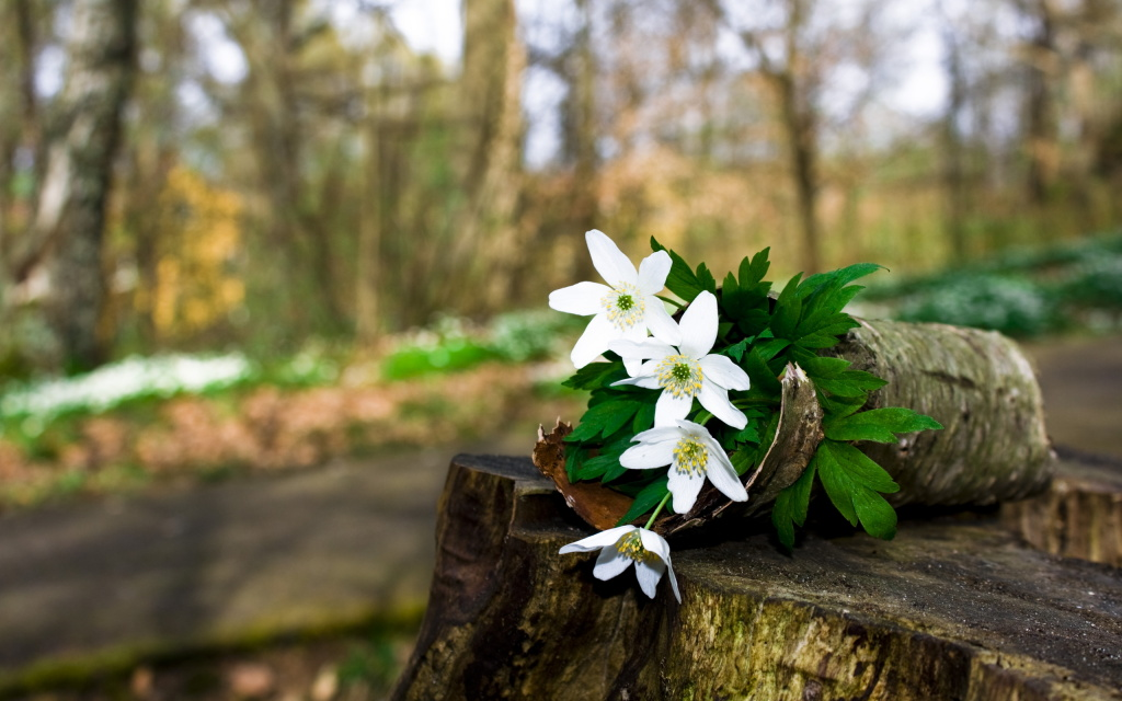 Spring Forest Flowers HD Wallpaper