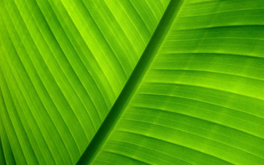 Tropical Leaf Macro HD Wallpaper
