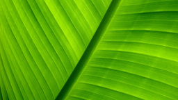 Tropical Leaf Macro