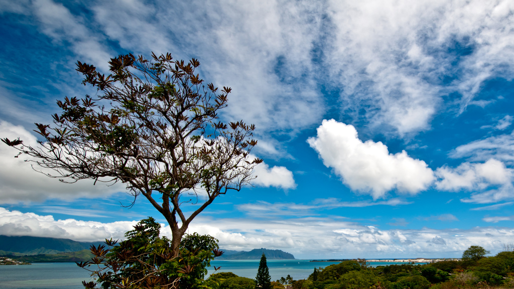 Viewpoint, Keaalu, Kaneohe, HI, US HD Wallpaper