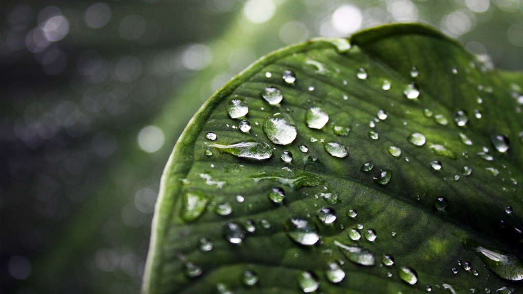 Water Droplets HD Wallpaper
