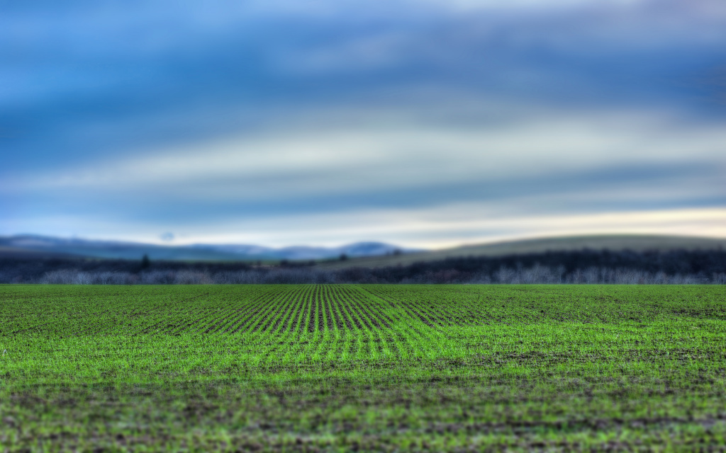 Winter Wheat Tilt-Shift HD Wallpaper