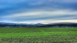 Winter Wheat Tilt-Shift