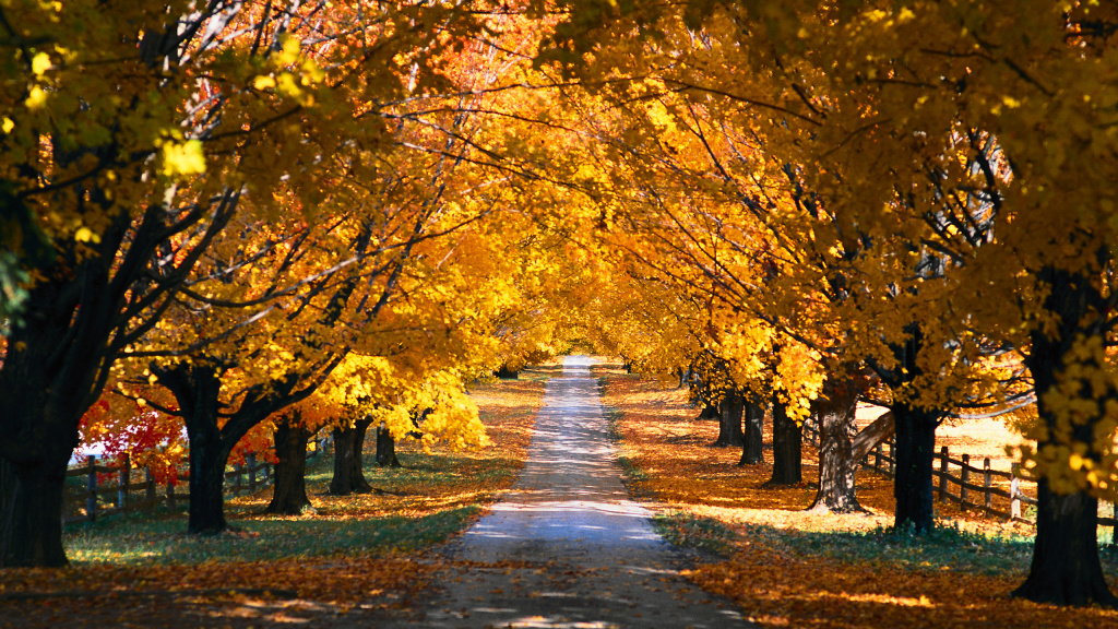 Fall Trees Along The Road HD Wallpaper