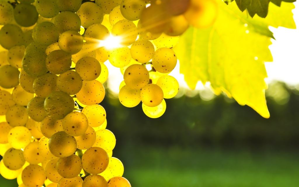 Golden Grapes HD Wallpaper