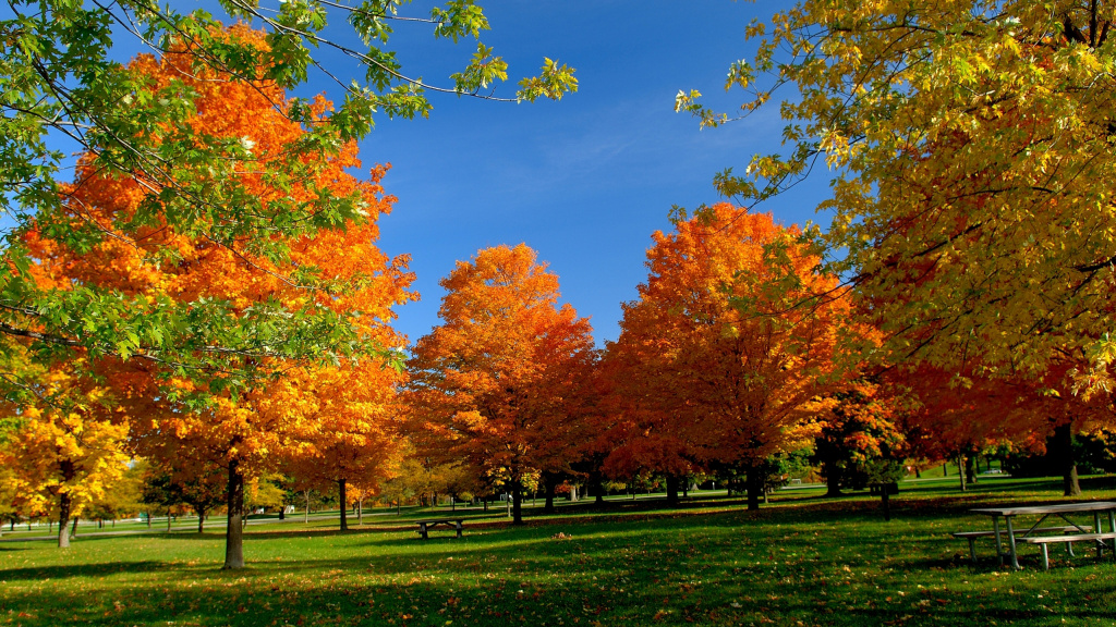 Orange Autumn HD Wallpaper