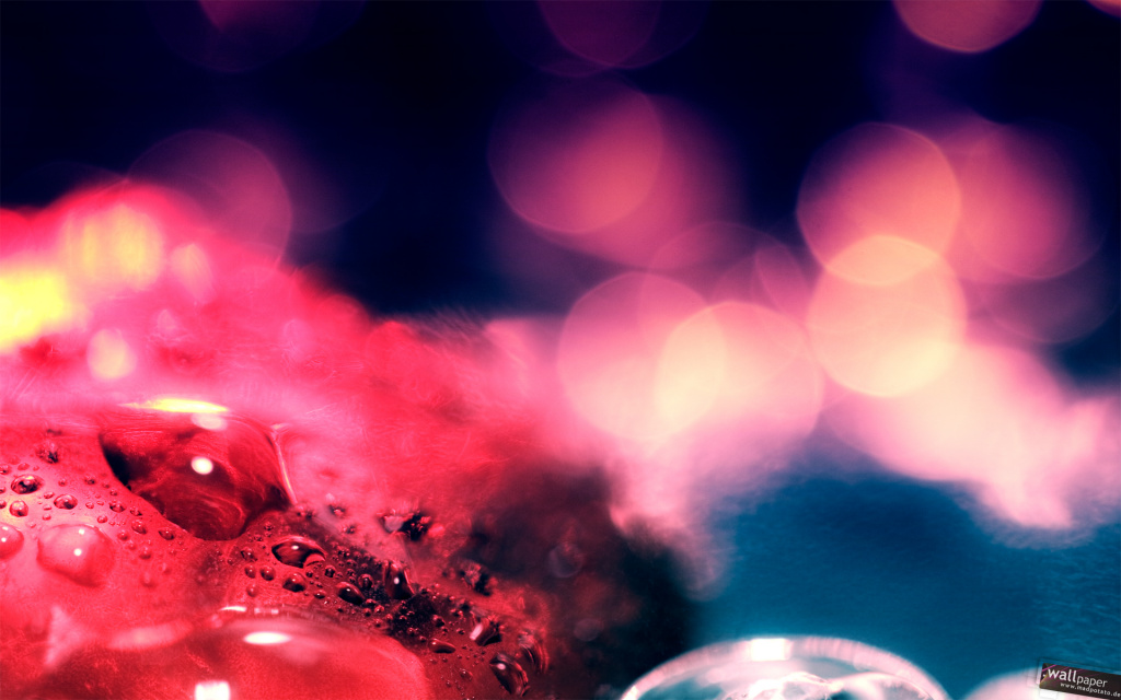 Red Drops And Bokeh HD Wallpaper
