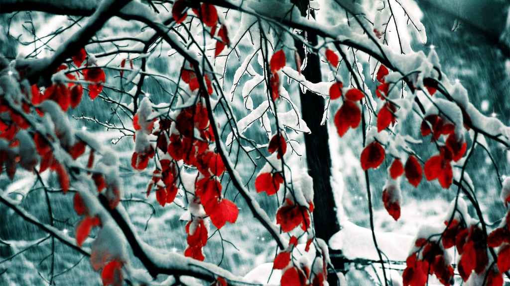 Red Leaves Winter HD Wallpaper