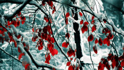 Red Leaves Winter