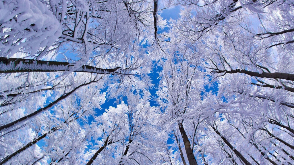 Snowy Trees And Blue Sky HD Wallpaper