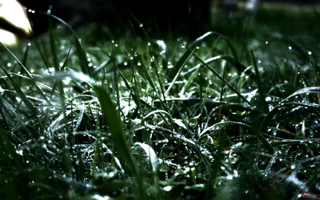Wet Grass HD Wallpaper